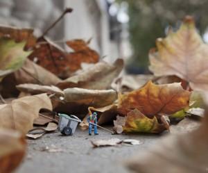 Dead Leaves 1 - blog