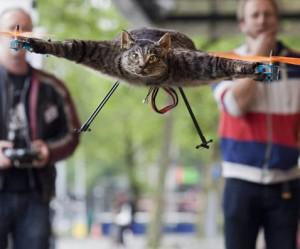 Vliegende kat van Bart Jansen