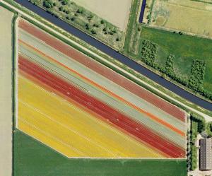 nederlandse-tulpenvelden-Mishka Henner