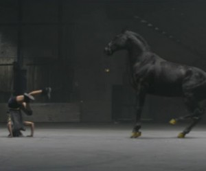 dance-off-commercial-paard