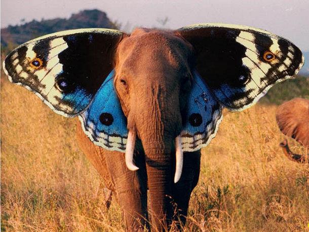 oren van een olifant