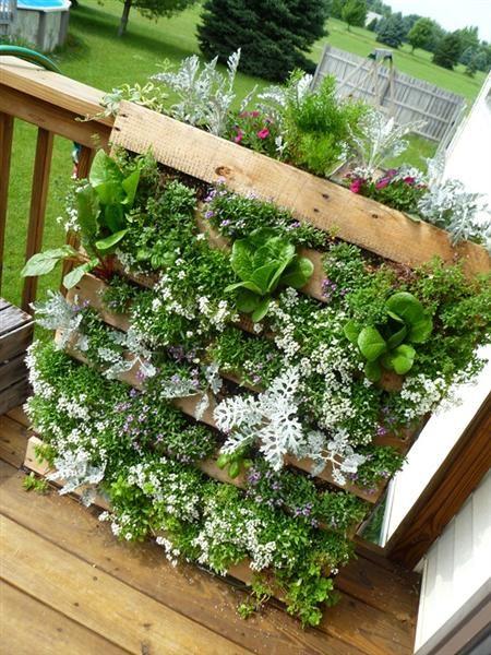 Plantenrek van pallet voor in de tuin