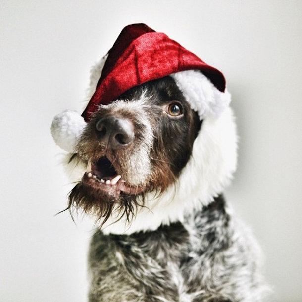 hond-foto-kerst-2