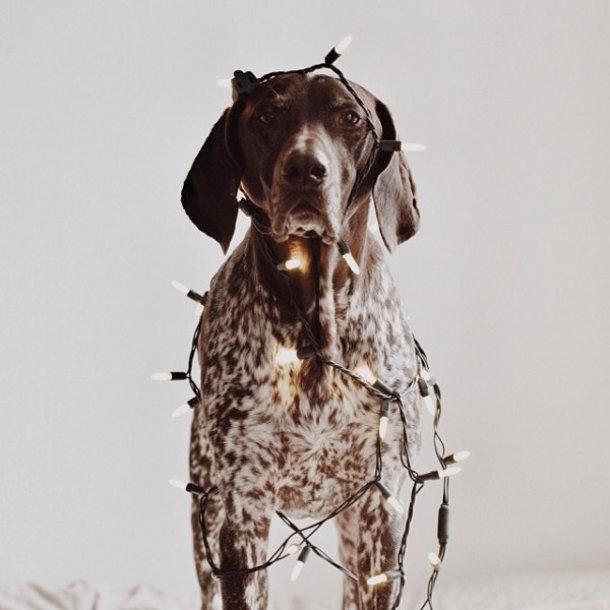 hond-foto-kerst-3