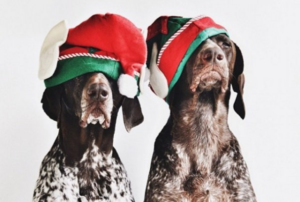 hond-foto-kerst