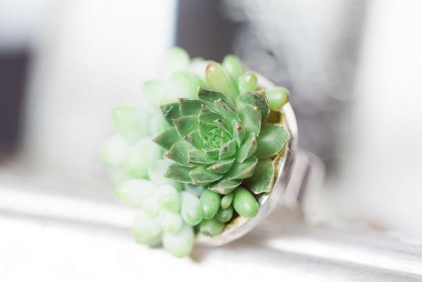 sieraden-vetplanten-4