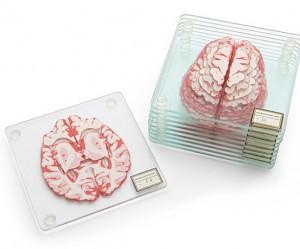 hersenen-onderzetters