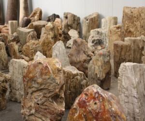 versteende-houten-grafstenen