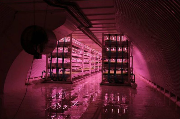 bunker-boerderij-londen-2