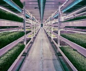bunker-boerderij-londen