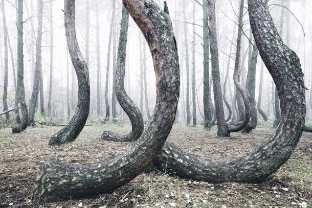bomen-bos-polen-2