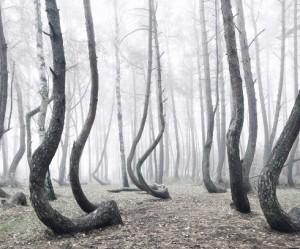 bomen-bos-polen
