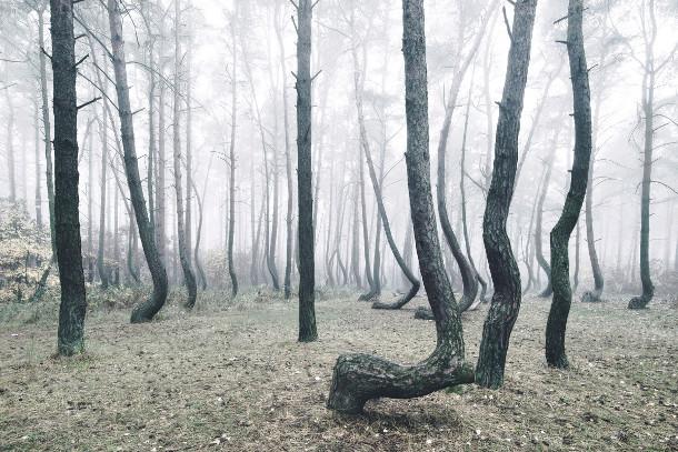 bomen-bos-polen-4