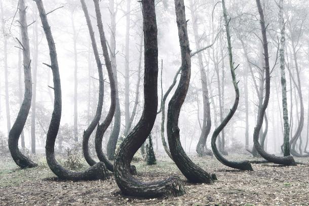 bomen-bos-polen-6