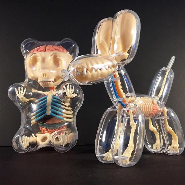 anatomie-speelgoed-2