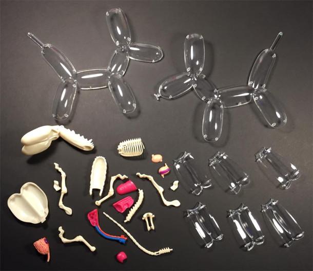 anatomie-speelgoed-3