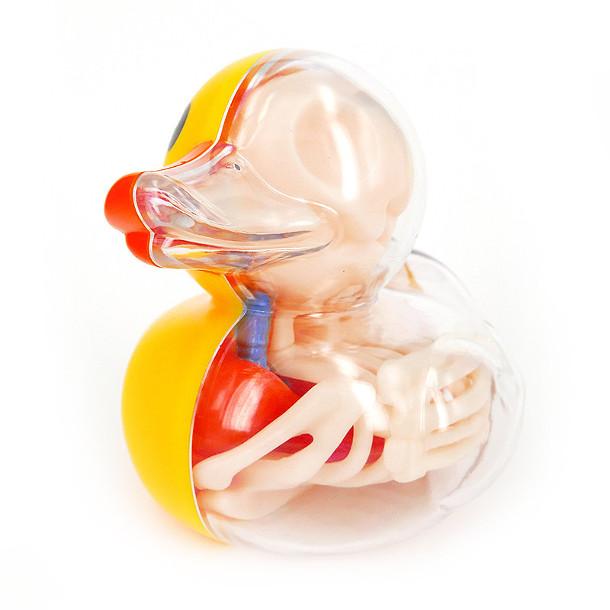 anatomie-speelgoed-7