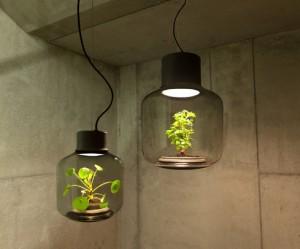 glazen-lampen-planten-zon