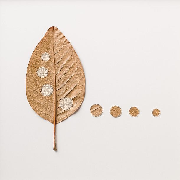 haken-bladeren-3
