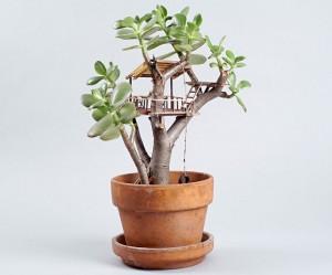 boomhutten-kamerplanten