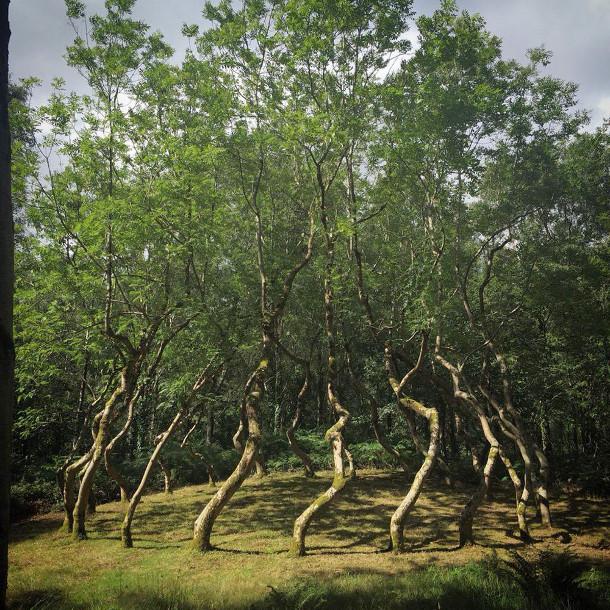 bomen-kunstwerk-2