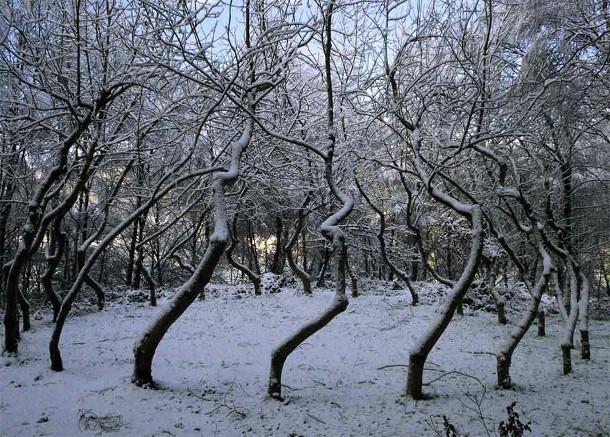 bomen-kunstwerk-3