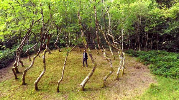 bomen-kunstwerk