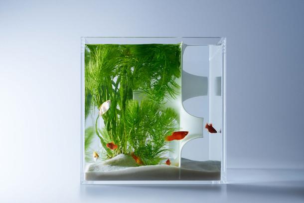 sculpturale-aquaria-3