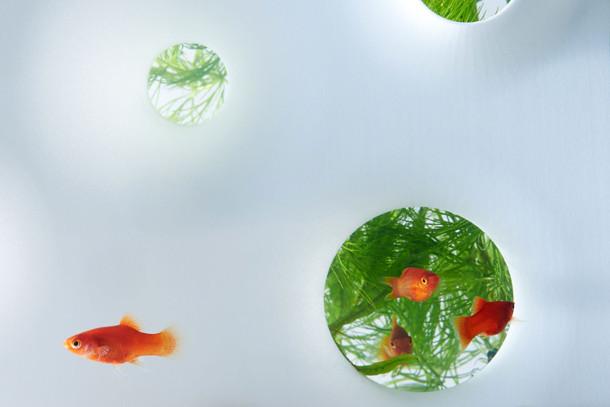 sculpturale-aquaria-4