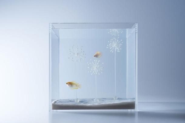 sculpturale-aquaria-5