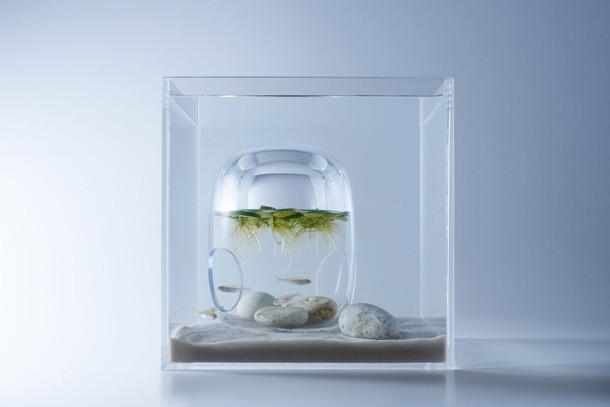 sculpturale-aquaria-6
