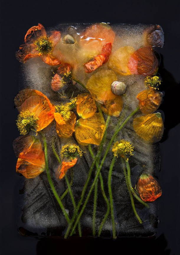 bevroren-bloemen-2