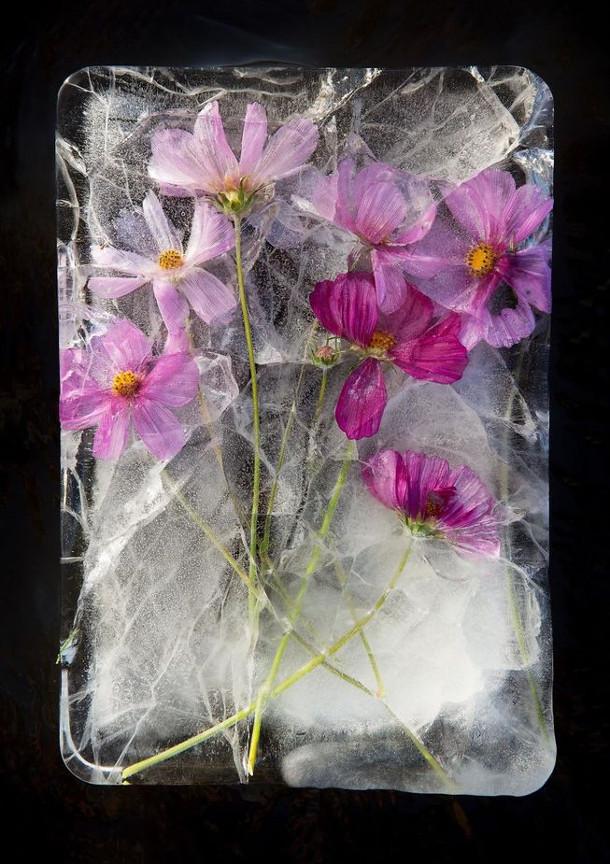 bevroren-bloemen-3