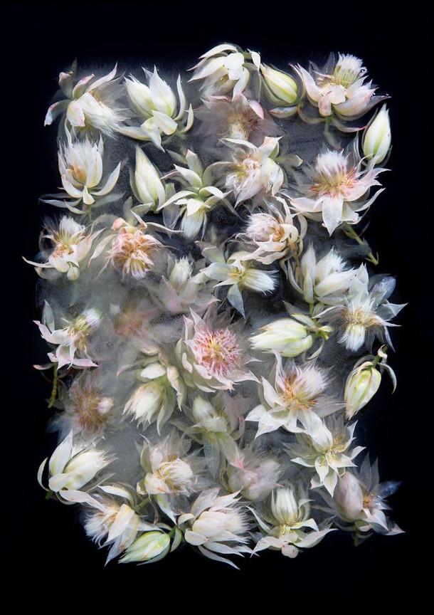 bevroren-bloemen-4