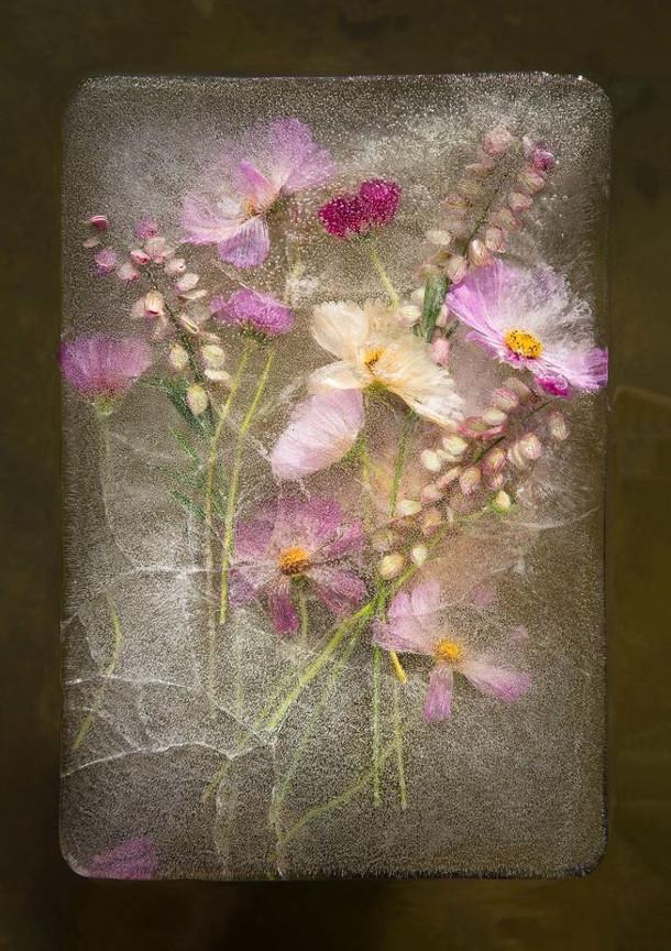 bevroren-bloemen-5