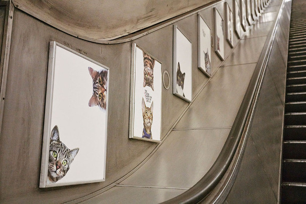 metro-katten-3