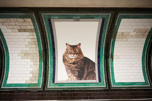 metro-katten-5
