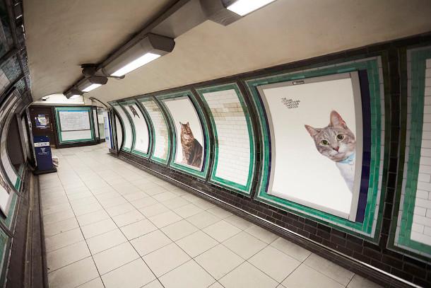 metro-katten-6