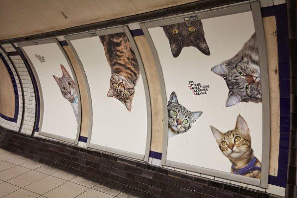 metro-katten