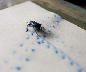 insecten-schilderen