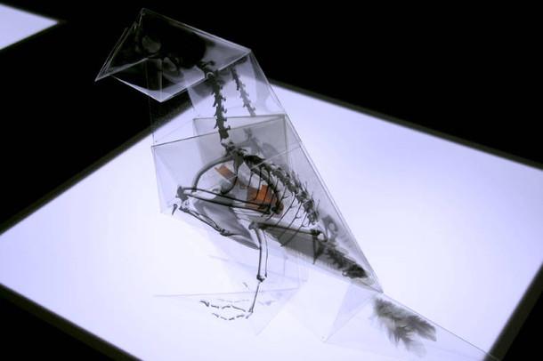 rontgen-origami-4