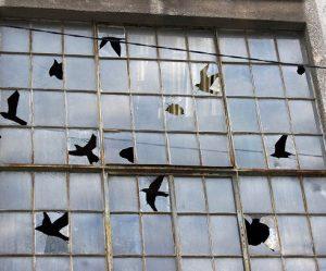 vogels-pejac