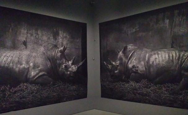 craigie-horsfield-centraal-museum