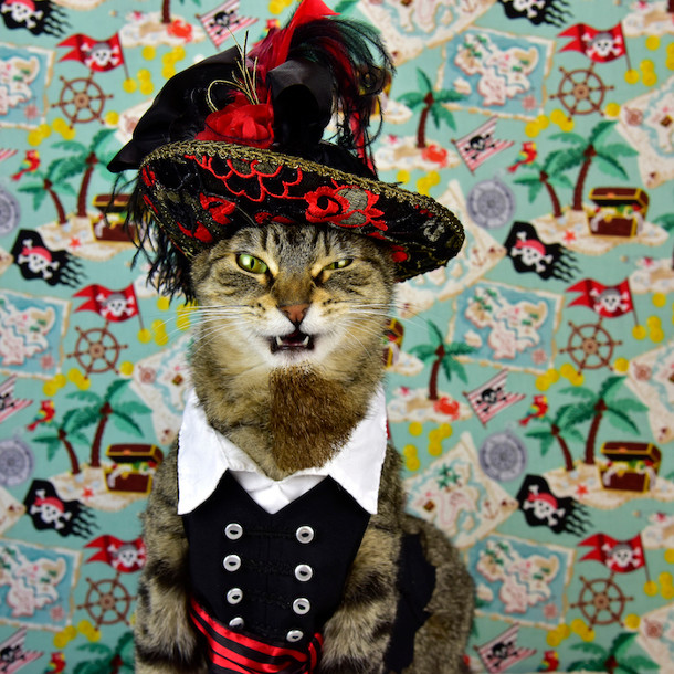 klassieke-portretten-katten-3