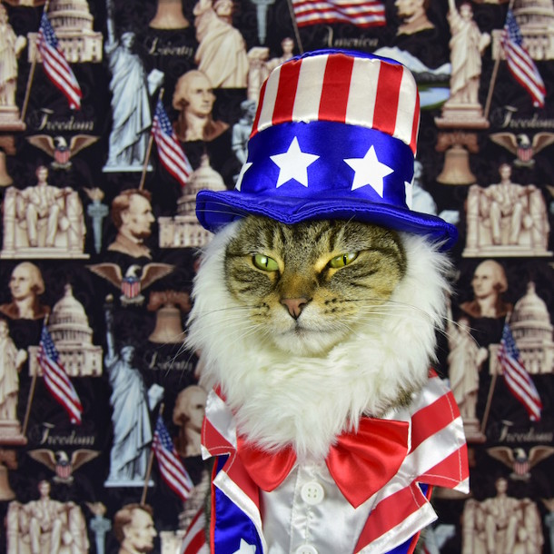 klassieke-portretten-katten-5