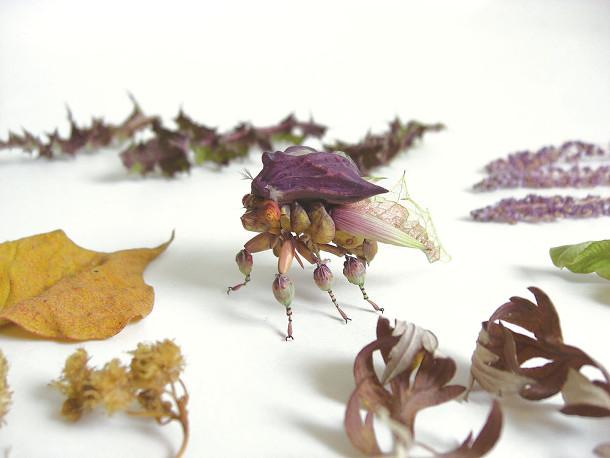 fantasierijke-insecten-4