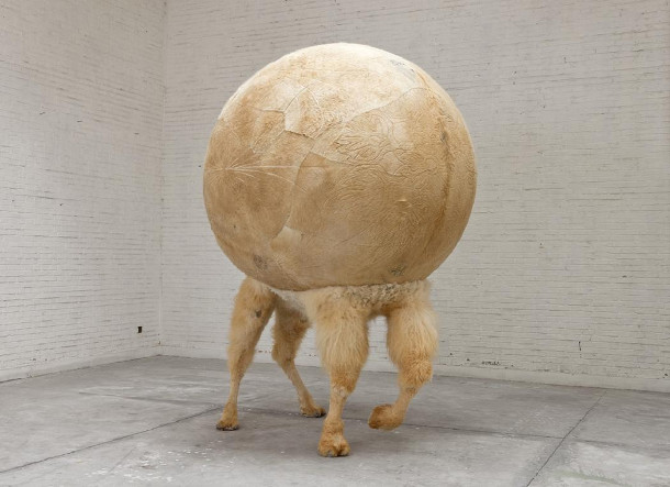 opgezette-dieren-bol-2