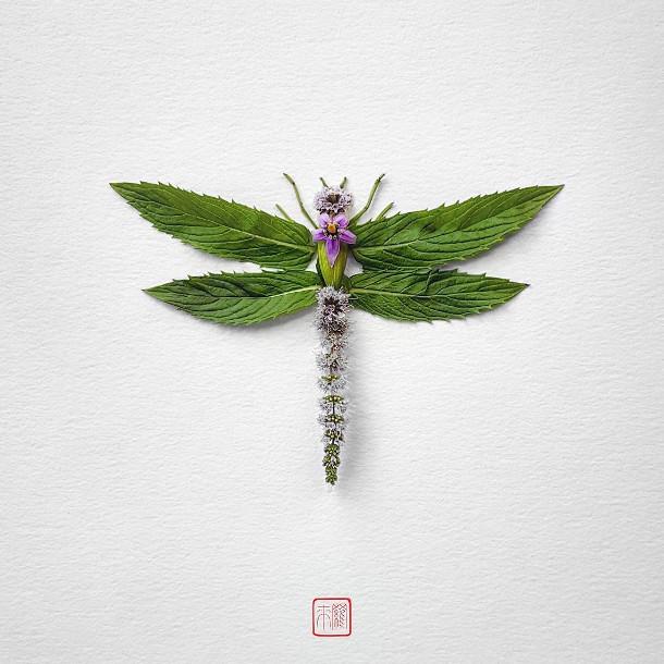 bloemen-insecten-3