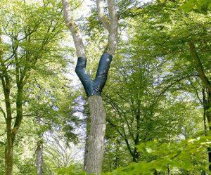bomen-spijkerbroeken