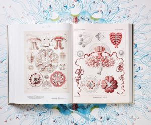 biologische-illustraties